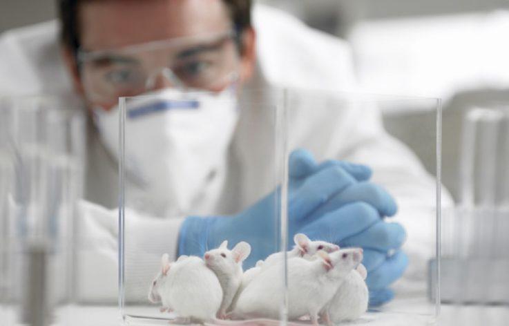 Исследования на животных