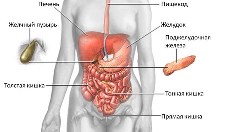 Коротко об анатомии кишечника