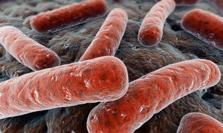 Расшифровка анализа кала на дисбактериоз