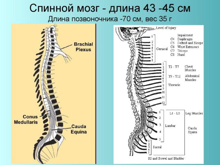 Сотрясении спинного мозга