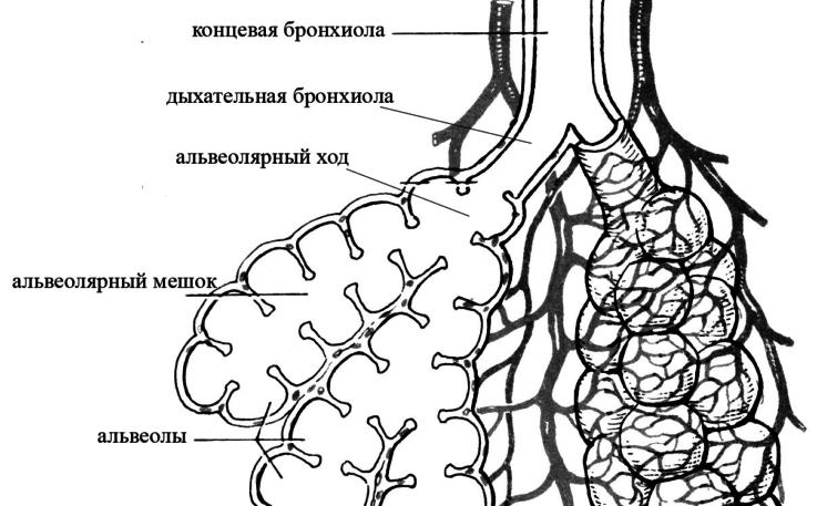 Что такое бронхообструктивный синдром