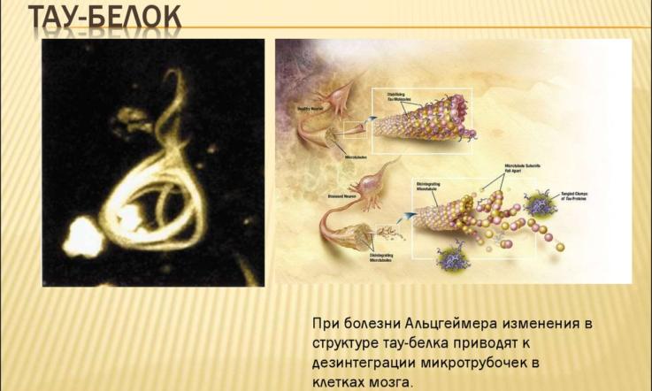 Причины и механизмы развития патологии