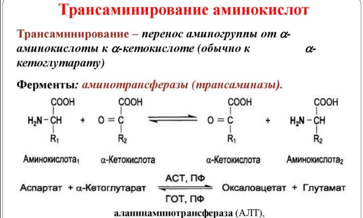 Характеристика фермента