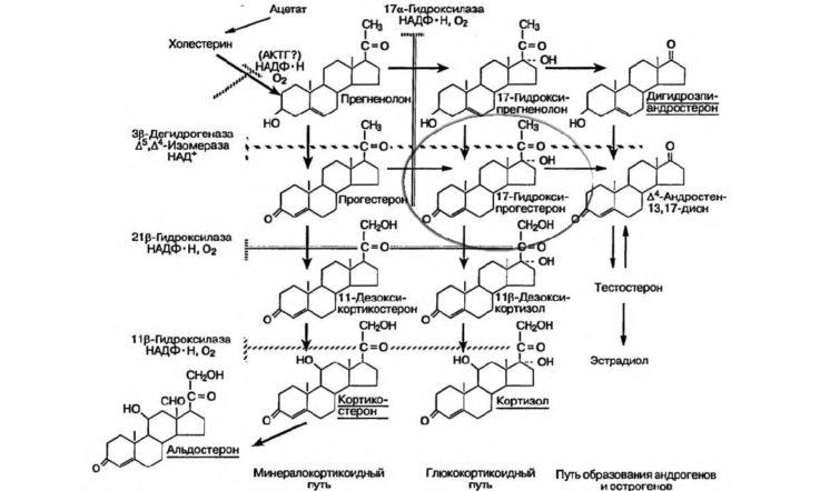 Схема синтеза глюкокортикоидов