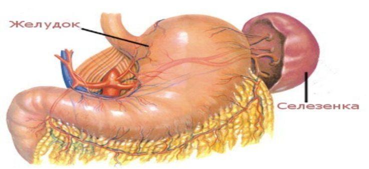 Коротко о лимфатической системе