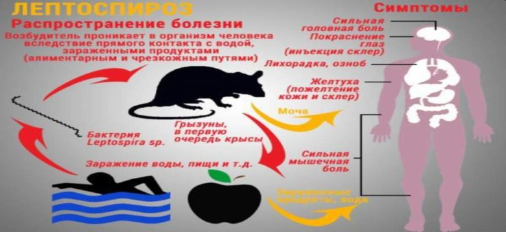 О причинах и механизме развития болезни