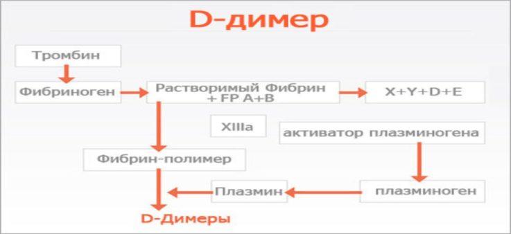 Что нам известно о Д-димере?
