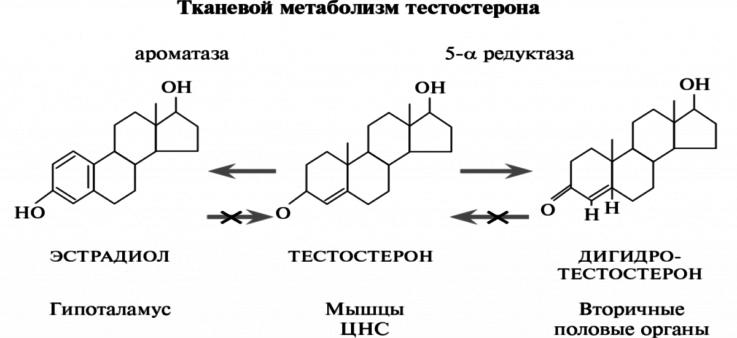 Зачем организму нужен дигидротестостерон?