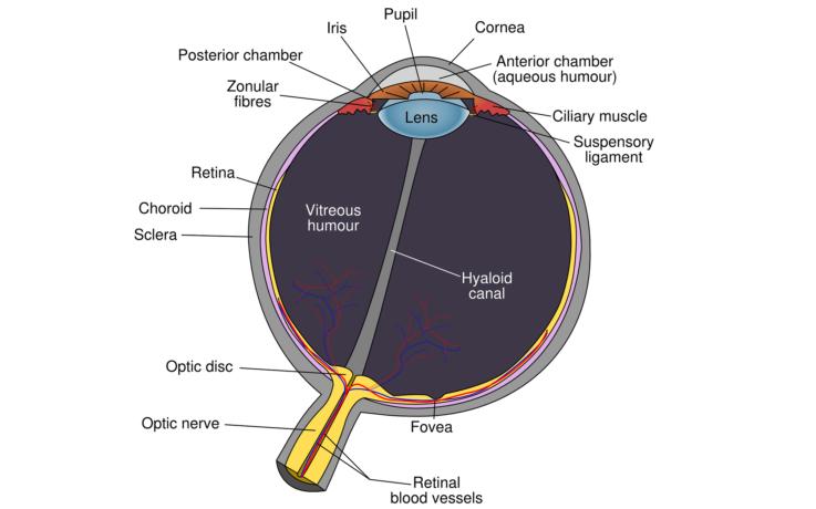 Причины гемианопсии