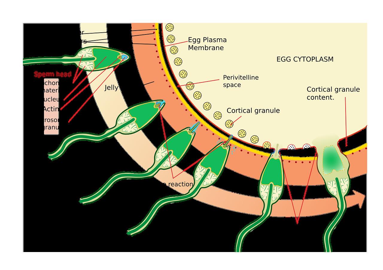 Патогенетические механизмы